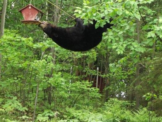bear_feeder